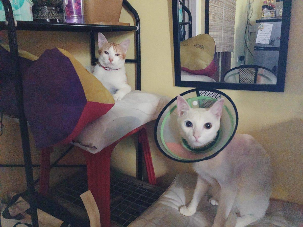 New #Friends!   #Cats #Cat #Kittens #Kitten #Kitty #Pets #Pet #Meow #Moe #CuteCats #CuteCat #CuteKittens #CuteKitten #MeowMoe  https://www.meowmoe.com/560340/new-friends/…   .pic.twitter.com/OXs7xuBKHG