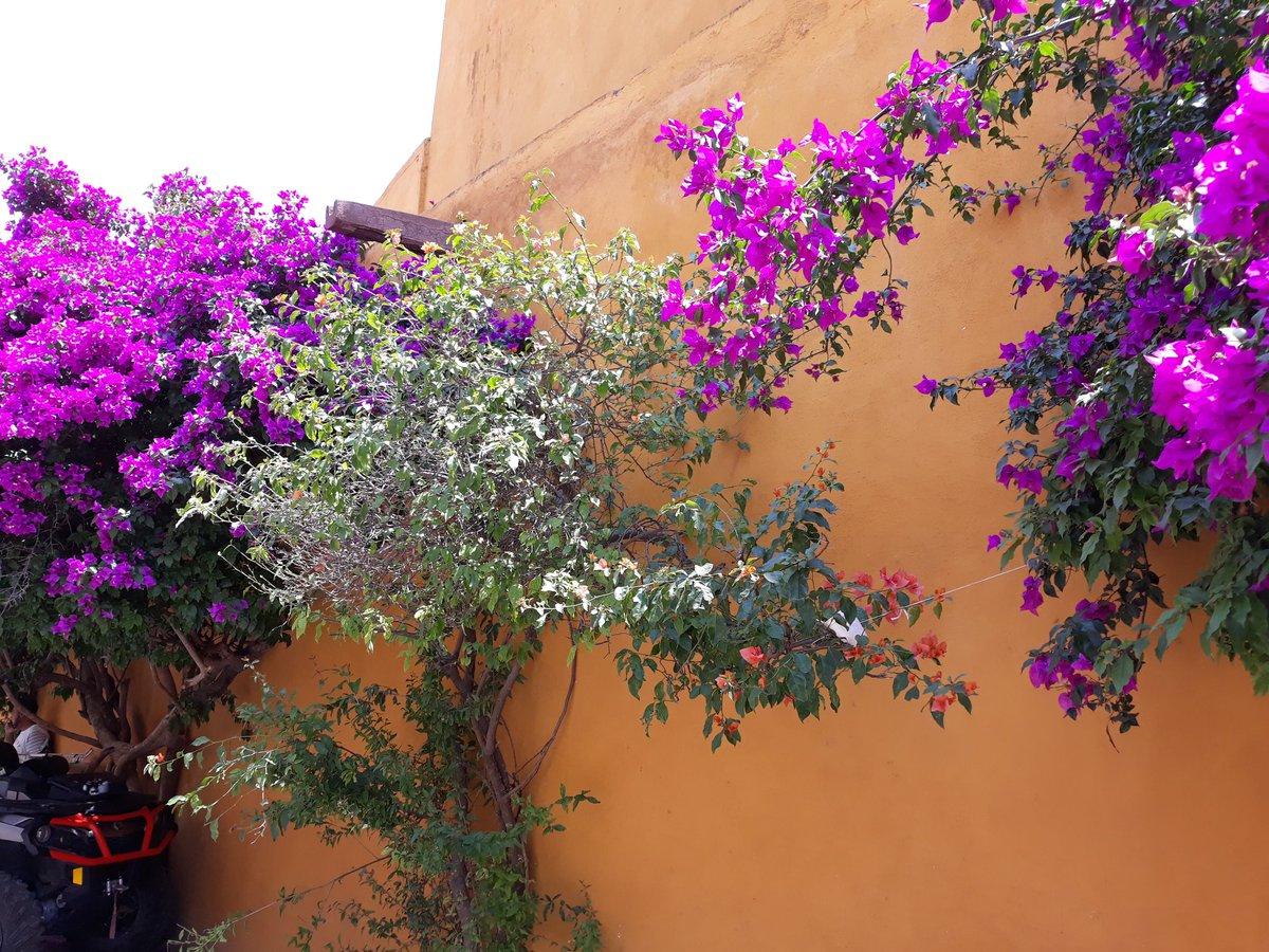 The colours in Bernal. Home to the third highest monolith in the world-peña de Bernal, it is one of the 13 wonders of Mexico.  #visitmexico🇲🇽 #mexico #bernal #sansebastianbernal #queretaro #pueblomagico #travel #bourganvillia #colours