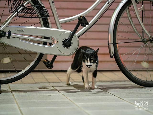 #猫#cat#ねこ#外猫#catstagram #instacat #streetphotography #catgram#portrait #snap #snapshot #catphoto #catlover #picneko #写真好きな人と繋がりたい https://ift.tt/2ND2P9Ppic.twitter.com/pTUC7kym2f