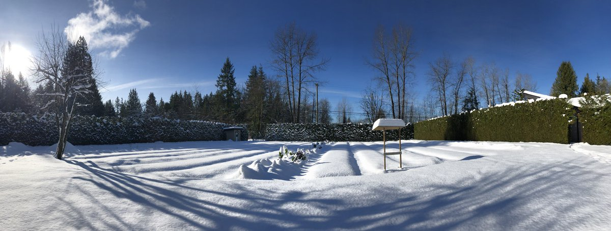 Happy frosty #Friday! What a beautiful day.   The farm entrance is plowed and the #farmstand is open if you need some frozen #garlic.   #farmdirect #smallfarm #winter #winterviews #mapleridge #local #snow #bcsnow #cold #bcfarmfresh https://t.co/PehHOQ8zMF