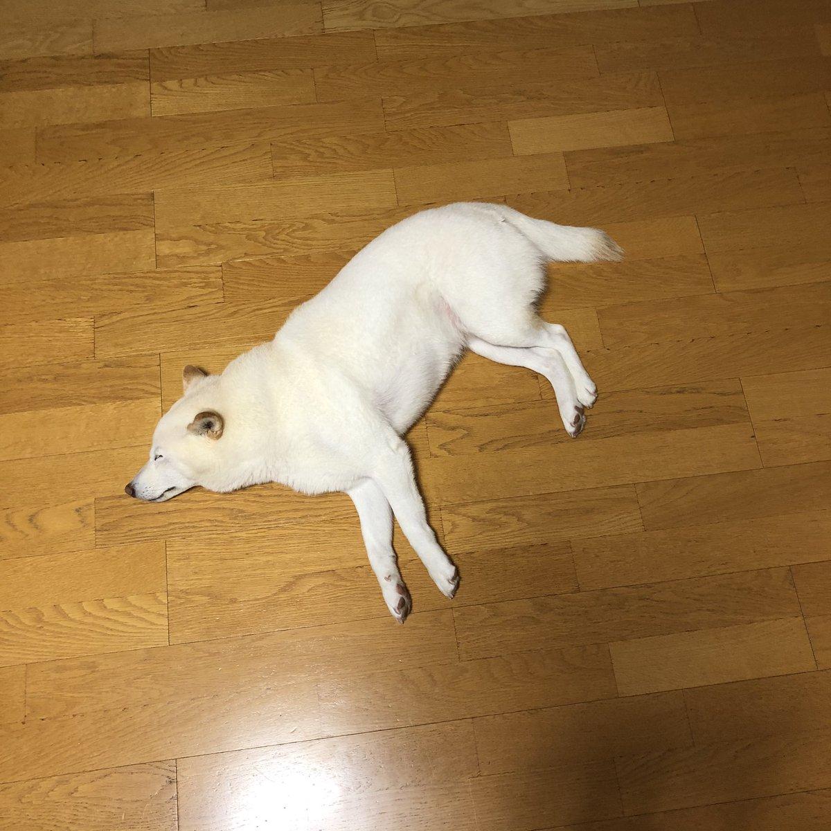 この部屋が床暖房だと言う事に気が付いてしまった犬