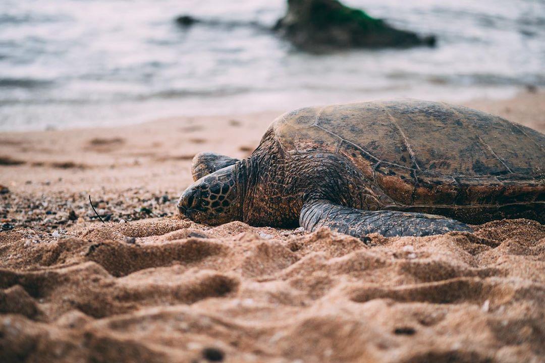 What do your weekend plans consist of?   IG ryanwimer #alohabones #goodvibesonly #alohastate #paradise #livealoha #beachfront #beachlover #beachstyle #beachlife #beaches #beach #beachday #beachvibes #oceanholic #oceanlovers #oceanloverpic.twitter.com/PKofLDMG8J