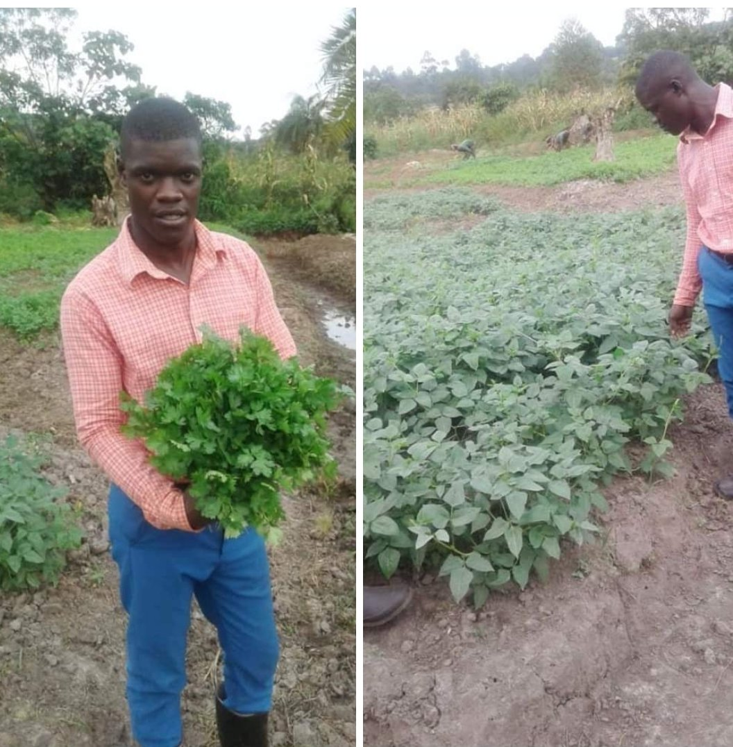 He is one of the inspired youths in Uganda that embrassed organic farming techniques from POFI with open arms. Mr Kenneth Matovu got motivated to venture into organic farming.... Read more  https:// m.facebook.com/story.php?stor y_fbid=1342724865915562&id=967271936794192&sfnsn=mo  …  <br>http://pic.twitter.com/r3qjkY0fm9