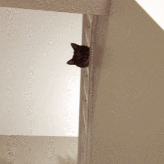 #Making an #Entrance   #Cats #Cat #Kittens #Kitten #Kitty #Pets #Pet #Meow #Moe #CuteCats #CuteCat #CuteKittens #CuteKitten #MeowMoe  https://www.meowmoe.com/560350/making-an-entrance/…   .pic.twitter.com/aE7kkUl6q0