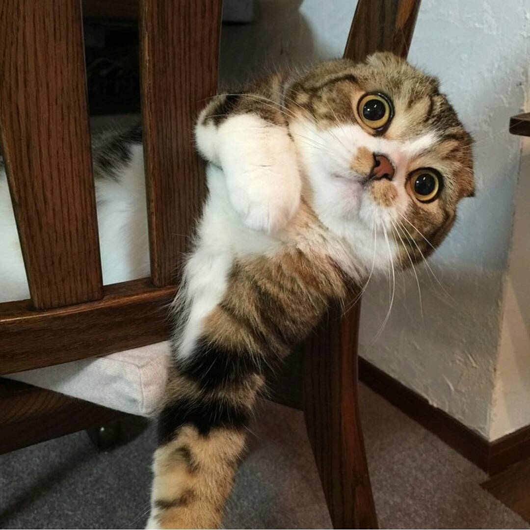 This feels comfy! ...   #Cats #Cat #Kittens #Kitten #Kitty #Pets #Pet #Meow #Moe #CuteCats #CuteCat #CuteKittens #CuteKitten #MeowMoe  https://www.meowmoe.com/560352/this-feels-comfy-121/…   .pic.twitter.com/OLOp8ZKlXL