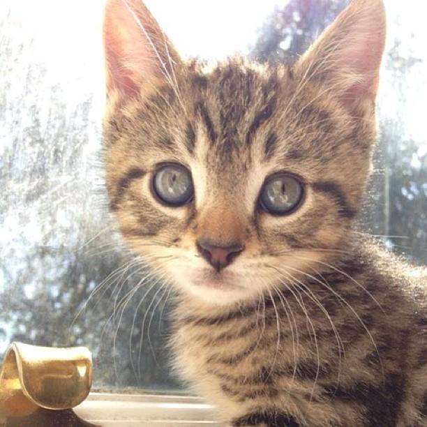 Wanna go for a walk? ...   #Cats #Cat #Kittens #Kitten #Kitty #Pets #Pet #Meow #Moe #CuteCats #CuteCat #CuteKittens #CuteKitten #MeowMoe  https://www.meowmoe.com/560362/wanna-go-for-a-walk-71/…   .pic.twitter.com/seCrMgRWht
