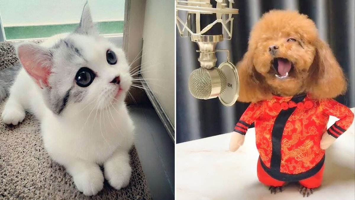 Baby Animals  Videos Compilation cute m ...   #Cats #Cat #Kittens #Kitten #Kitty #Pets #Pet #Meow #Moe #CuteCats #CuteCat #CuteKittens #CuteKitten #MeowMoe   #Animales #BabyAnimals #BabyDogsCuteAndFunny #Cat #CatVideos #CuteAnimals   https://www.meowmoe.com/560364/baby-animals-%f0%9f%94%b4-videos-compilation-cute-moment-of-dogs-and-cats-2020-perros-y-gatos-recopilacion-2/…   .pic.twitter.com/TG2tbuUHli