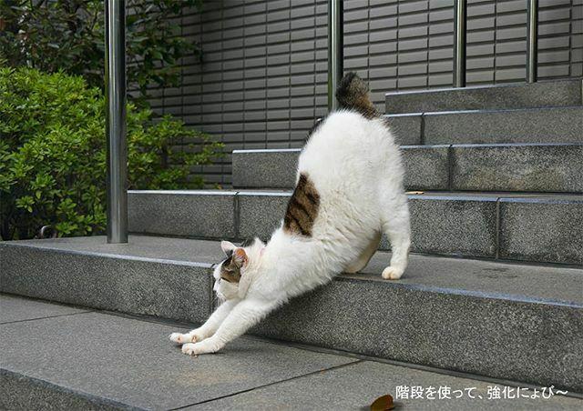 「ねこ休み展 in 横浜みなとみらい」 この土日で終了です。 行きそびれている皆様、お急ぎください 展示作品より 「階段を使って、強化にょび~っ!」 #ねこ #猫 #cat #gato #chat #外猫 #straycat #ねこ部 #ふわもこ部 #猫好きさんと繋がりたい #cutecats #followme https://ift.tt/2u9ouzKpic.twitter.com/foSJs59GkI