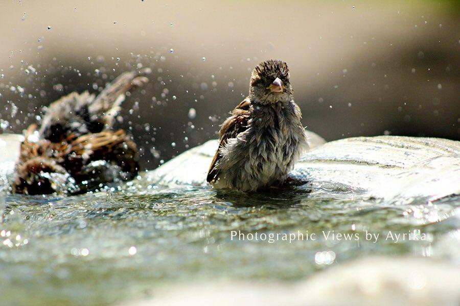 Bird Bath #landscapephotography #PhotographyIsArt #birdphotography #NaturePhotography pic.twitter.com/xBgSO71cOY