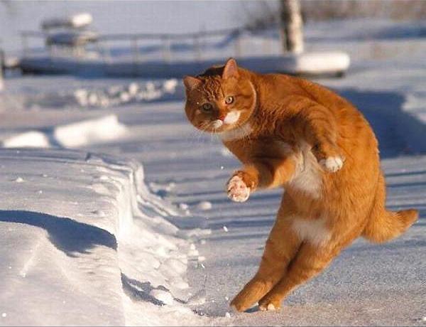 東京にも雪が降ったよー!雪の上で踊る猫を作ってみました。