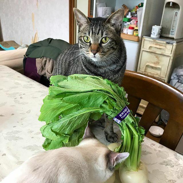 すなぷぴー、それ猫草やない。 #ちがうそうじゃない  #イマネコ #cat #catphoto #猫写真 #猫pic.twitter.com/ZthHpeeyoM