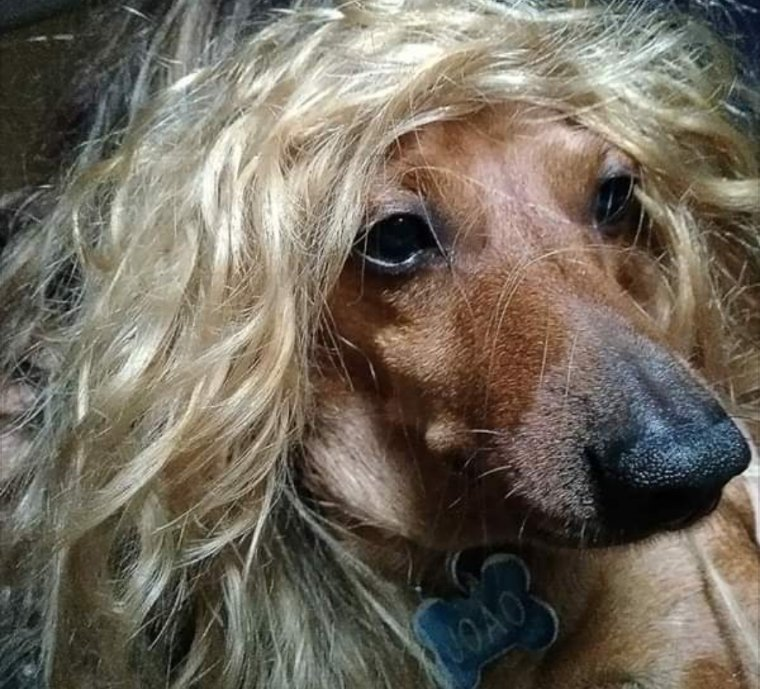 Cachorro da minha tia montado de sósia do @VitorKley!!! Fofura maior não há! pic.twitter.com/qGtKUrFLNw