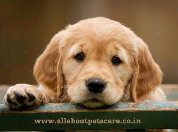 Do you want to know everything about pets care please visit on our blog....!!!                                       http://www.allaboutpetscare.co.inpic.twitter.com/8UsxFeRwy5