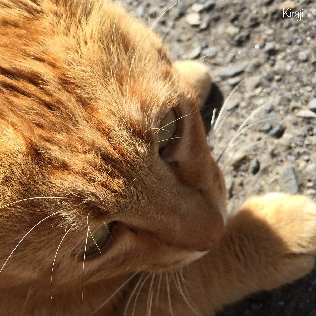 撮りためた猫写真をたれ流し#猫写真 #猫画像 #猫 #ねこ #ネコ #猫好きさんと繋がりたい #Cat #Cats #CatPhoto pic.twitter.com/uSgu0qt61h