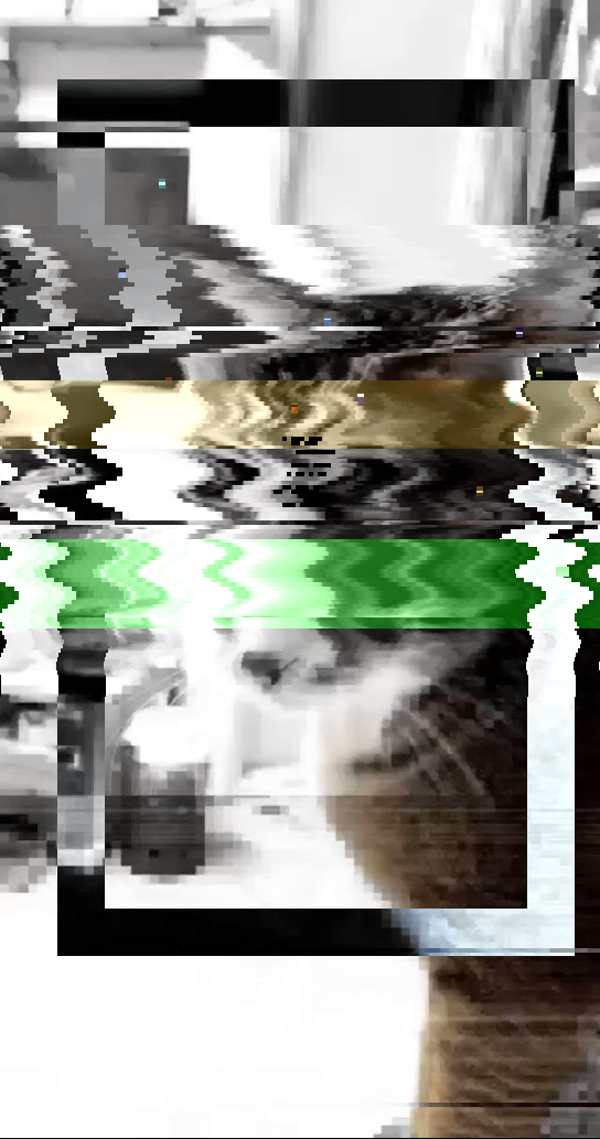 😓🌫 glitch pixelate generative cat shader effect bot Origin img by @AlexsonChu