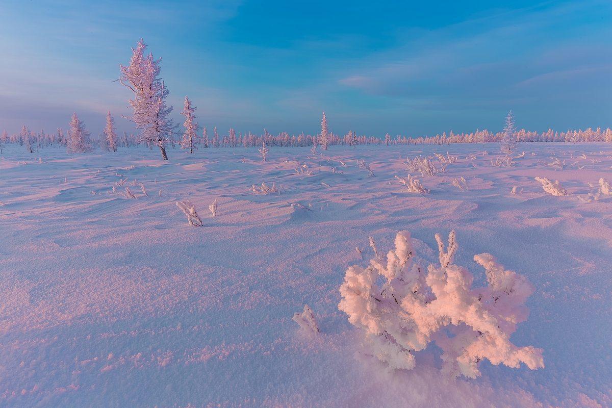 много картинки к суровой зиме тундры неправильной несвоевременной обработке