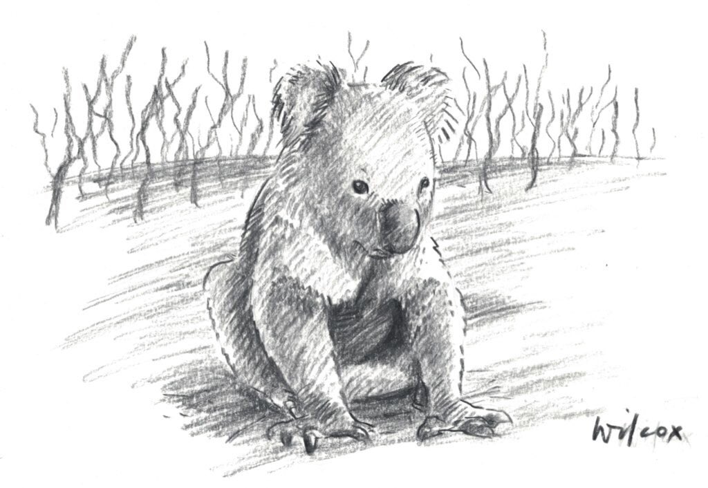 Ok yes the original koala drawing can be auctioned, I give it until midnight next Saturday 25th Jan, the winning bid makes a donation to a reputable wildlife/bushfire recovery fund and shows me their receipt, I send the drawing to them.  https:// twitter.com/agnes_alingane /status/1218411275035635712  …  <br>http://pic.twitter.com/ziFa7IHgDc