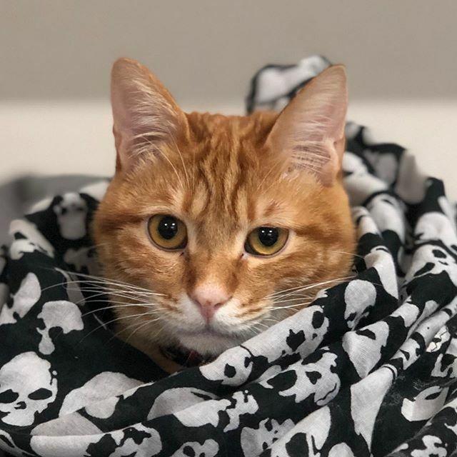 #猫 #cat #茶トラ #保護猫 #タイム君 #catphoto #catstagram #catlovers #nekoclub #ねこ部 #ニャンスタグラム #ねこすたぐらむ #猫写真 https://ift.tt/2G0DTVxpic.twitter.com/q6a2qQeSjx