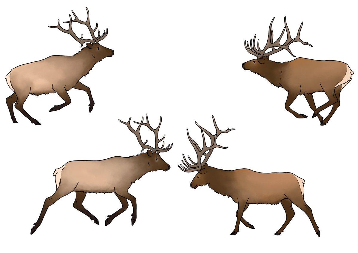 Little elk study I did a long time ago. #digitalart #animals #illustrationart pic.twitter.com/6KFo88EXmX