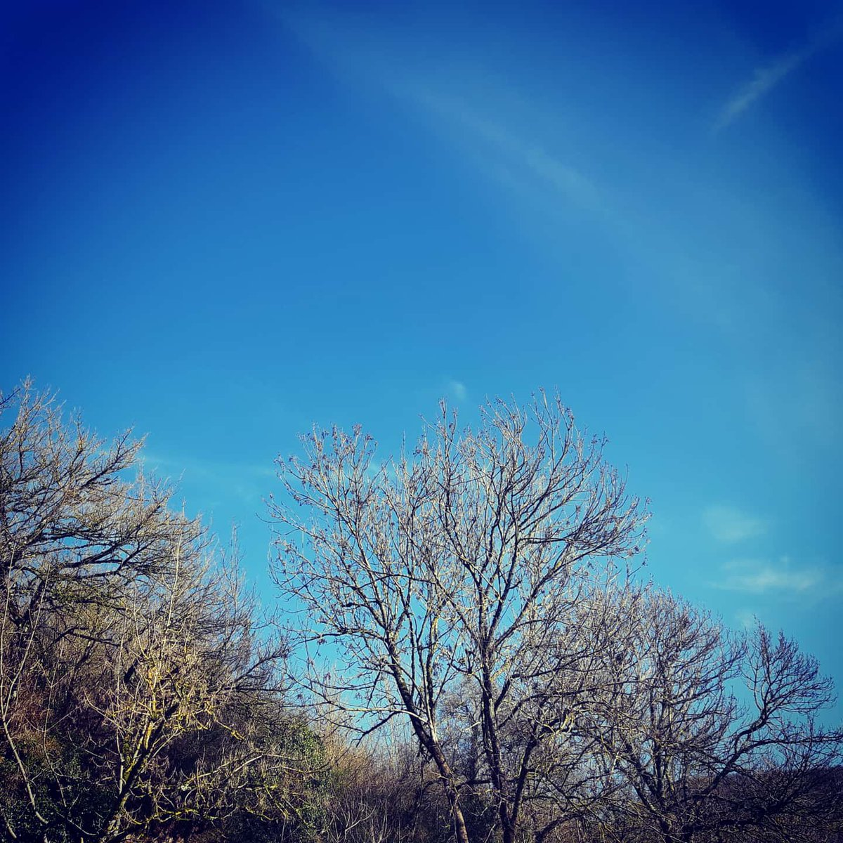 #Ciel bleu et lumineux chez moi!!  Rien de mieux pour passer un agréable #samedi!!  Bonne continuation dans votre #journée et courage aux bosseurs!! #citation #ligue_des_optimistes #instantprésent #photography #art #paysage #nature #plaisirdesyeux #jevousfaisprofiterpic.twitter.com/gBO0d10HbH