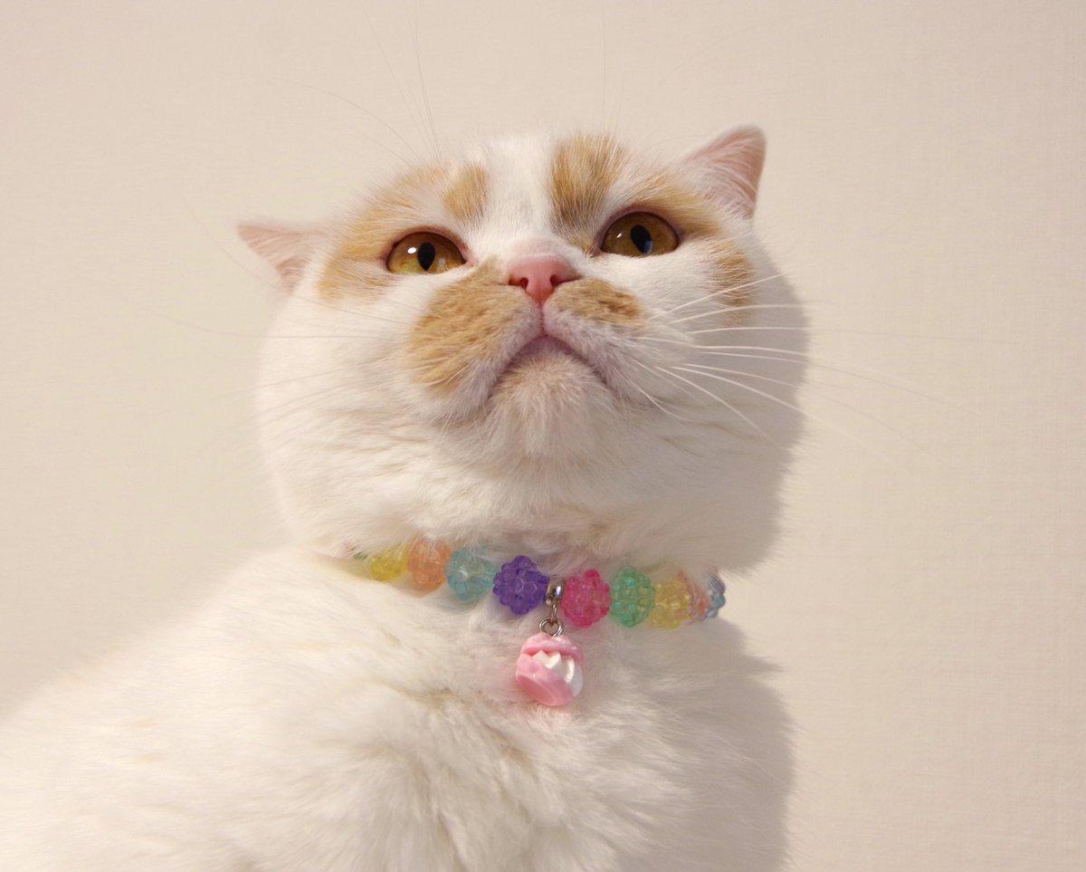 新しいネックレス嬉しい子ー!「ホーイ!」
