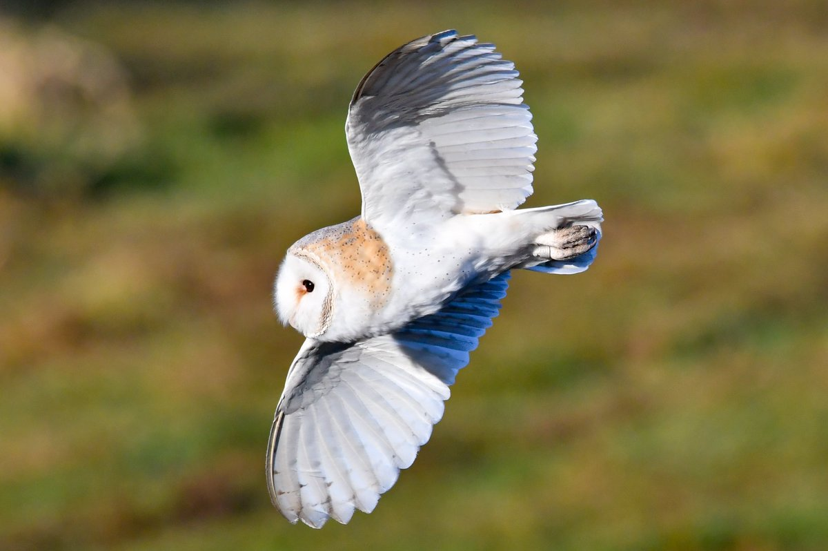 RT @mufc_smith: Male and female Barn Owls this morning in Lancashire @Lancswildlife @BarnOwlTrust @BBCSpringwatch @wildlife_uk @RSPBbirders @Natures_Voice @_BTO @iNatureUK @NatureUK @BirdWatchingMag @RSPB_N_England @CountryfileMag @RSPBEngland