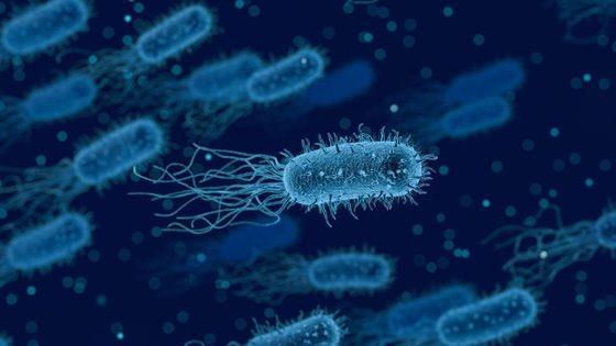 【新法】抗生物質が効かないスーパーバグを「物理的に引き裂いて破壊する」技術が発表される豪・ロイヤルメルボルン工科大学の研究チームがスーパーバグ(薬剤耐性菌)を、磁気を帯びた液体金属ナノ粒子で物理的にバラバラにするという殺菌手法を開発したことを発表した。