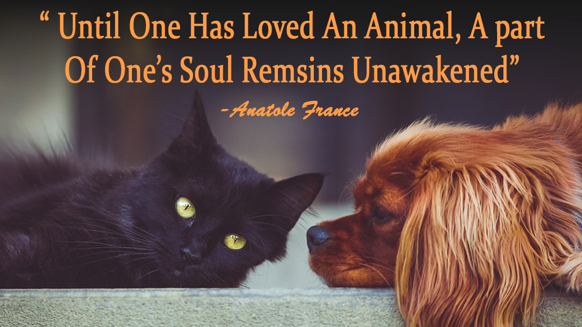 Until One Has Loved An Animal A part Of Ones Soul Remsins Unawakened  #inspirationalquote #inspirationalquoteoftheday #crueltyfreeblogusa #inspirationalquotesz #inspirationalquotesaboutlife #inspirationalquotesdaily #inspirationalquoteforlifetime <br>http://pic.twitter.com/xNhiLiz8qI