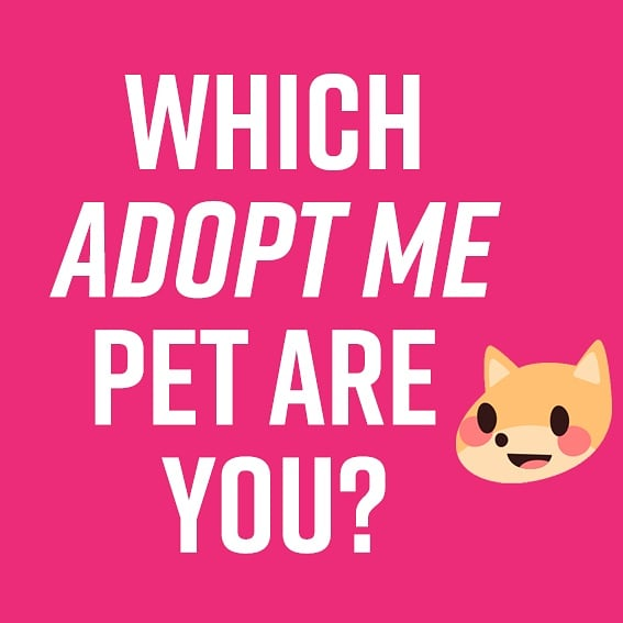 Adopt Me On Twitter Which Adopt Me Pet Are You We Have A New Instagram Filter Try It Out Yourself And Make Sure To Follow Us Https T Co Sxxvyvoy8a Https T Co 0h704fqqda