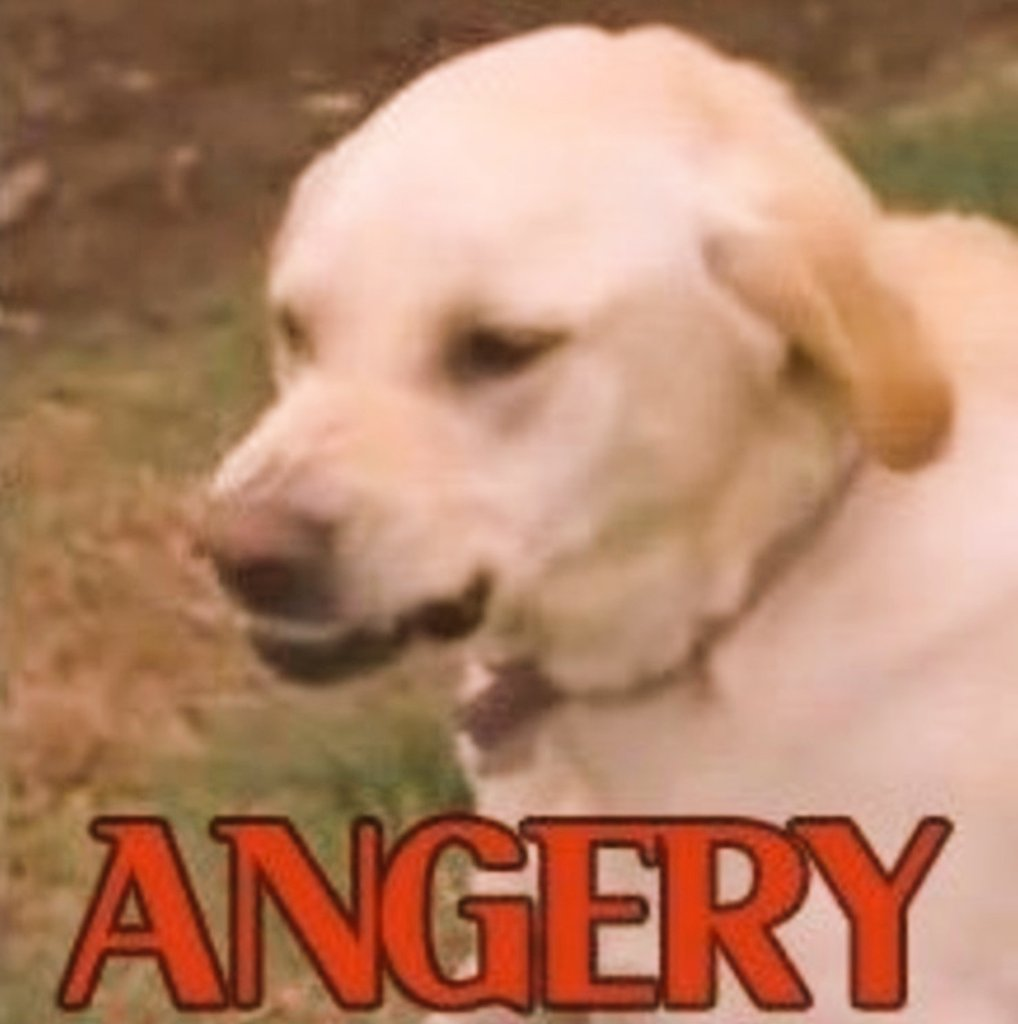 Arcanine when their owner packed them a Iapapa Berry instead of a Figy Berry for lunch. #Playpokemon #VGC https://t.co/QrNHA71qRn