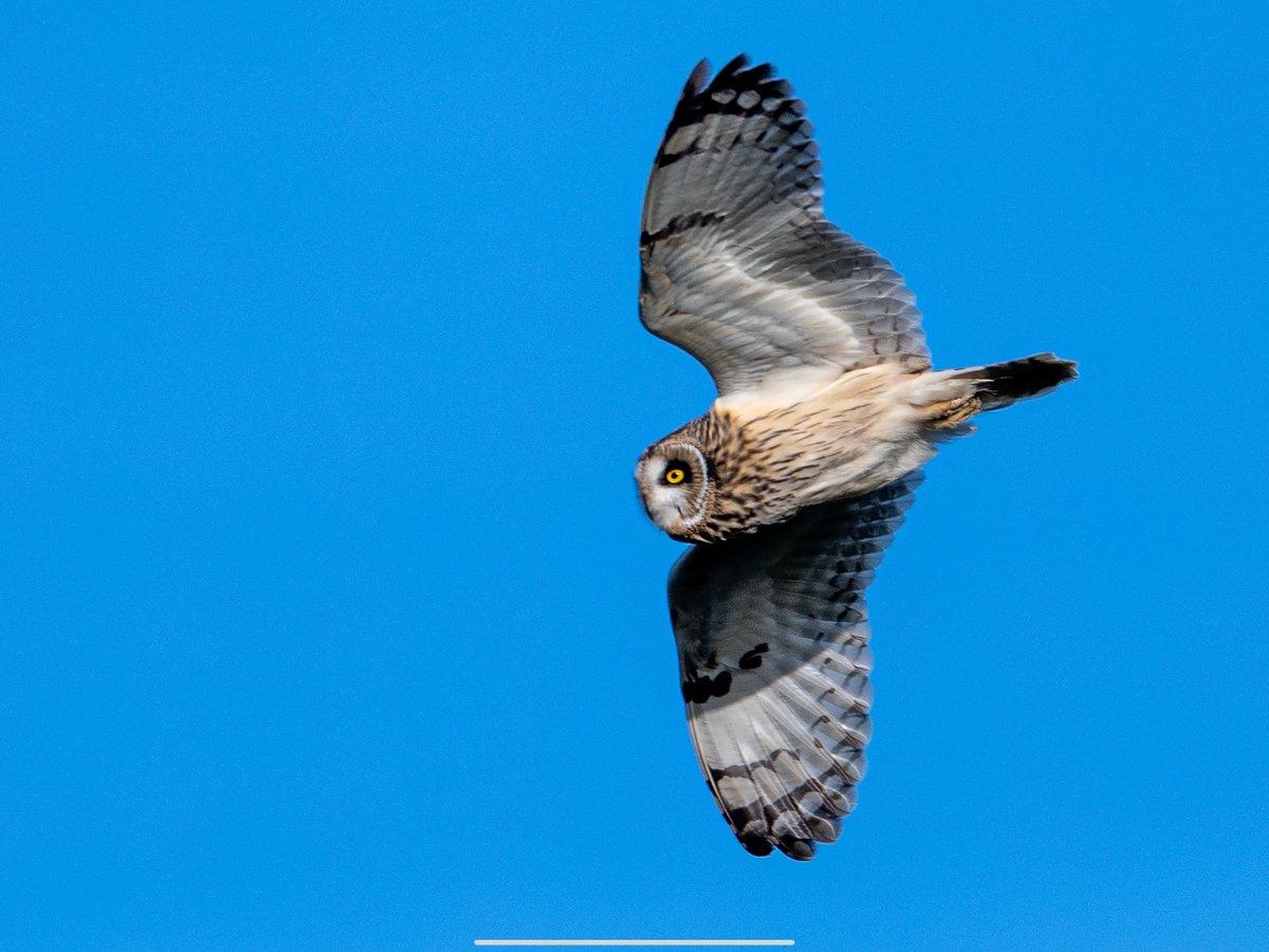 RT @verbius6: Fantastic watching Short-eared Owls on Marlborough Downs this morning, it always pays to look behind you! @Natures_Voice @RSPBbirders @wildlife_uk @WildlifeMag @BirdWatchingMag