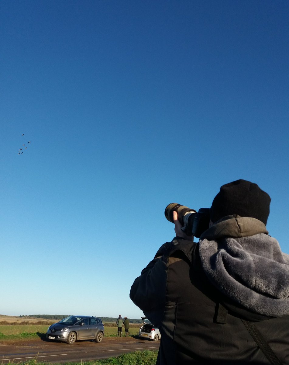 Tired but satisfied after a beautiful, crisp day birding Norfolk. The constant sound of Pink-feet plus Tundra Beans. Rough-leg & Barn Owls in stunning winter light, a special moment seeing a roosting Woodcock at #Titchwell & a packed Marsh (+1 Hen) Harrier Roost! More tomorrow! <br>http://pic.twitter.com/1RhSkbKdhA