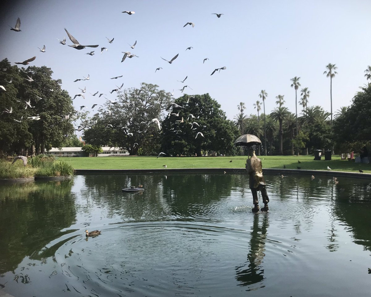 Birds in flight over the statue in the lake, St Kilda Botanical Gardens. Taken by @katminsky during aSunay morning #flashwriting @bumglueclub session. Sun 19 Jan 2020