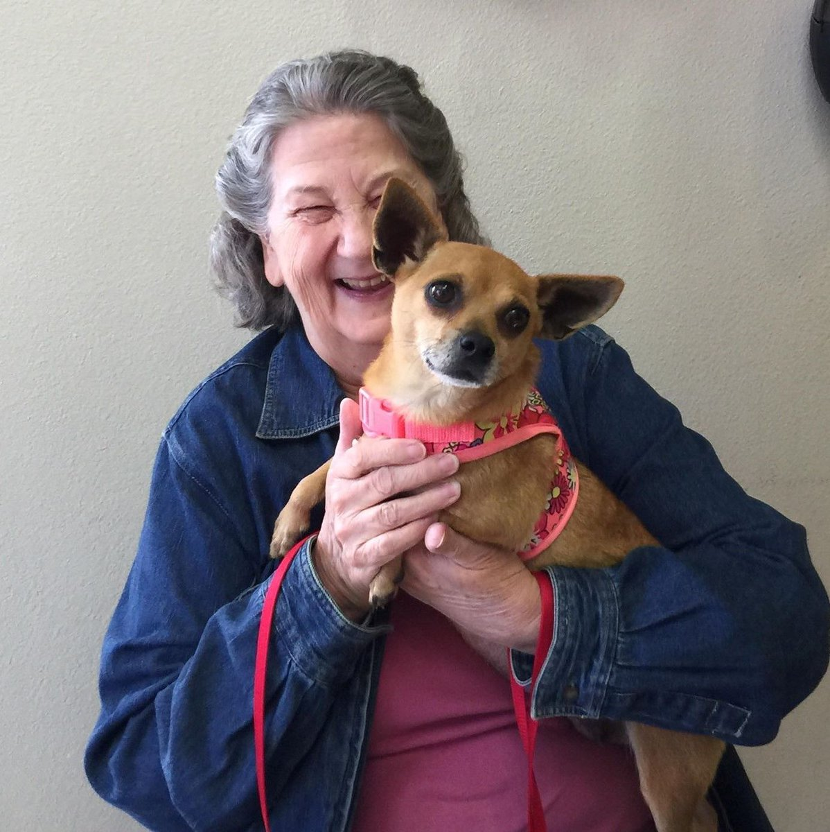Jenna was returned, but found her perfect match! She went home today with her new mom! Sometimes things work out like they're supposed to. Thank you for adopting from Richland Hills Animal Shelter #adoptdontshop #secondchances #shelterdog #chihuahuaspic.twitter.com/vkItWEByV7