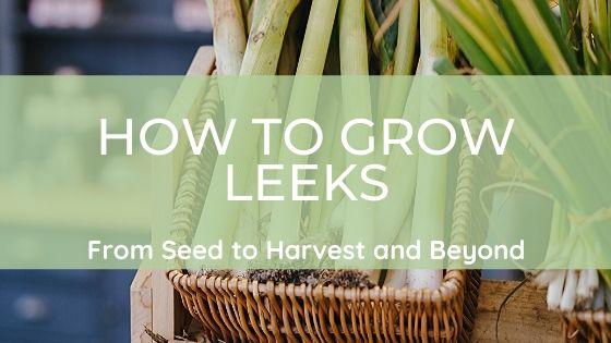 Wie man Lauch vom Samen bis zur Ernte und darüber hinausanbaut https://mutterhof.org/blog/2020/01/19/wie-man-lauch-vom-samen-bis-zur-ernte-und-darueber-hinaus-anbaut/…pic.twitter.com/au1OkxZm51