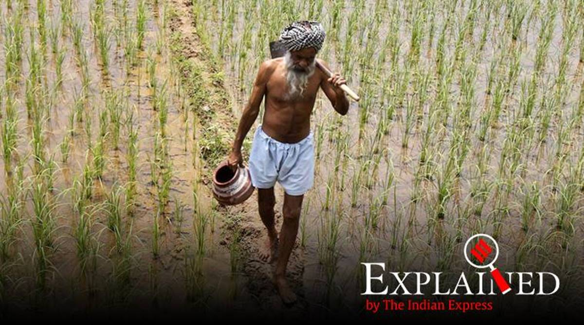 #ExpressExplained |  Can National Agriculture Market spur diversification in Punjab  http://bit.ly/3686mUf