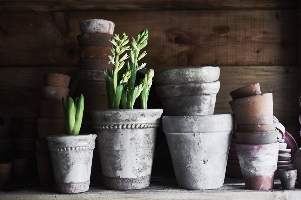 Even though full #gardening #season is a little way off, seeing those first few signs of #spring makes us happy! Spread the shoots, leaves and #flowers throughout your #home with our collection of #terracotta pots and zinc-lined baskets. #signsofspring #springbulbs