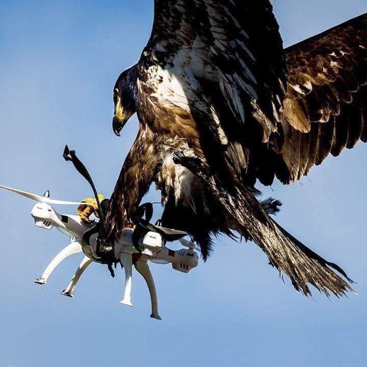 When nature defeats technology. <br>http://pic.twitter.com/OawpA3p1cA