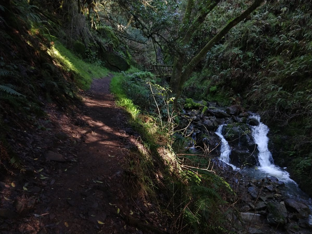 I hike back up the Dipsea Trail to the bridge across the creek, but instead of following Dipsea across the bridge and up the switchbacks, I keep following the creek on the Steep Ravine Trail. This trail is super pretty, with cool waterfalls. At one point I have to climb a ladder! pic.twitter.com/QormHnjnWH