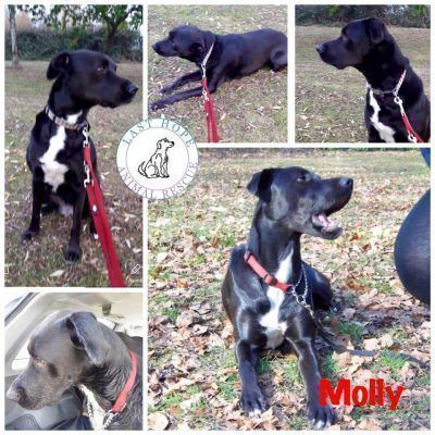 Please RT to help me find my furever home. You'll find all my details and an enquiry-form here  http://www. findingfureverhomes.org.uk/dogs/molly-2/    <br>http://pic.twitter.com/Ou6qYDw4Ip