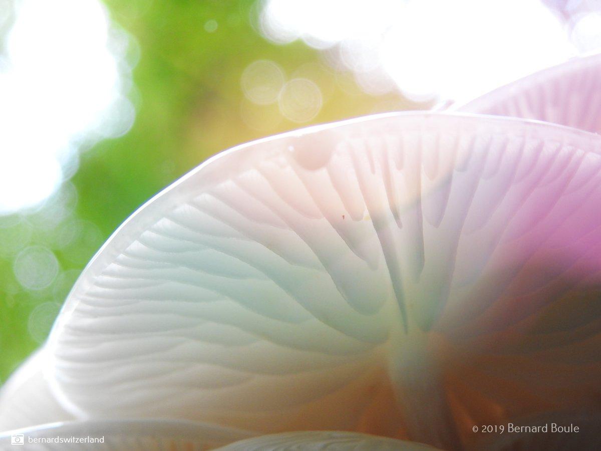 Chemin de la boucle / Forêt de Colombier. #neuchatelville #lacdeneuchatel #igerneuchatel #igersswiss #instaneuch #outdoorphotography #sky #paysdeneuchatel #jura3lacs #switzerlandpictures #switzerland  #milvignes #colombierpic.twitter.com/7eTB8rkWhv