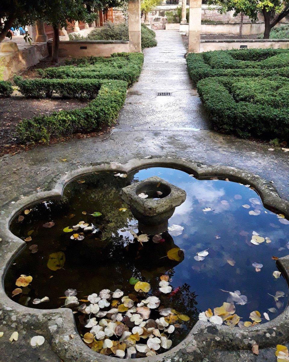Fulles dins el safreig #Palma #mallorca #illesbalears #jardinsdelbisbepic.twitter.com/ZCpsbp5lxI