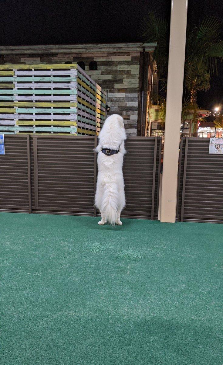 ドグランに来たはいいけど、貸切状態だったので他に誰か来ないか見てる犬。