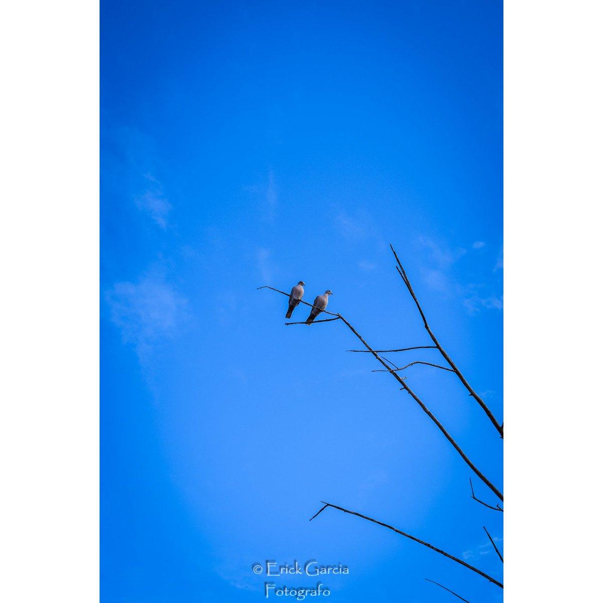 Siempre juntos. . . . . . #nature #nikon #nikonmexico #talentomexicano #mexico #photography #photo #mexicofotos #capturamexico #visitmexico #nationalgeographic #worldplaces #mx #fotografomazatlan #discoverychannel #erickgarciafotografia #mazatlan #sinaloa #hechoenmexico