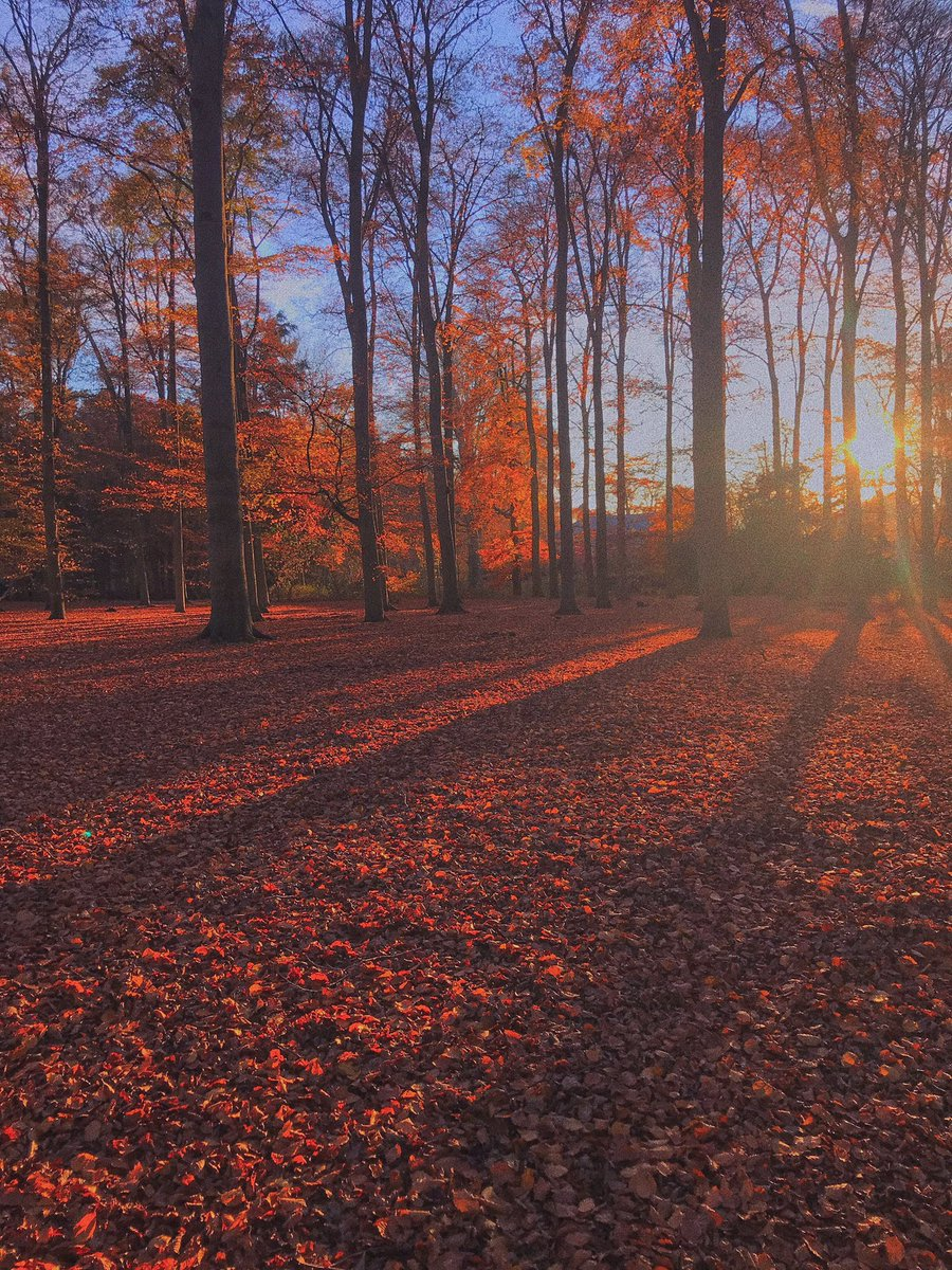 I made this photo in the forest in Rotterdam in The Netherlands! It was this Autumn with al the orange trees and leaves🤩I edit this picture with vsco#autumn #forest #vsco #orange #trees #like #Followme #rotterdam #thenetherlands #twitter #photo