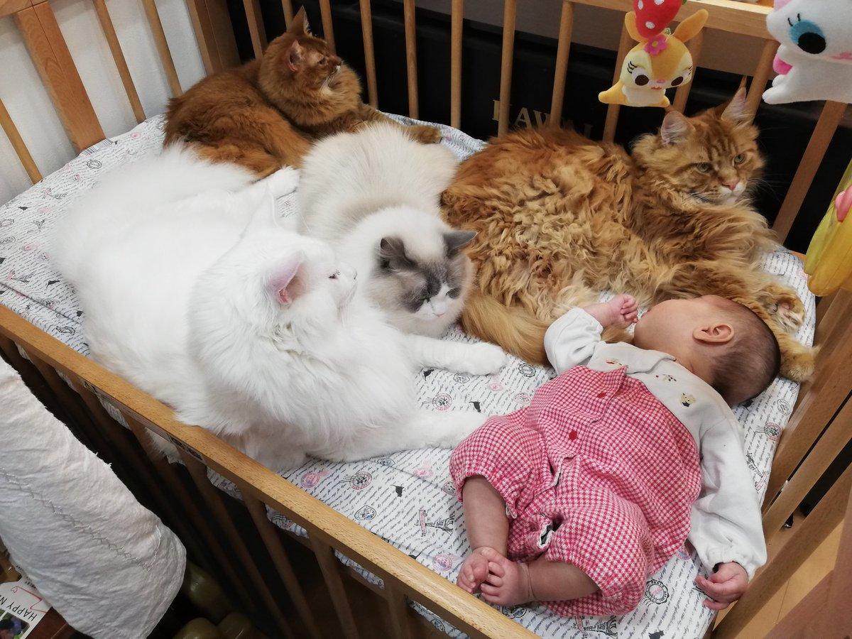 たった1人の新生児に対するデカ猫たちの威圧感ある見守りがスゴい✨