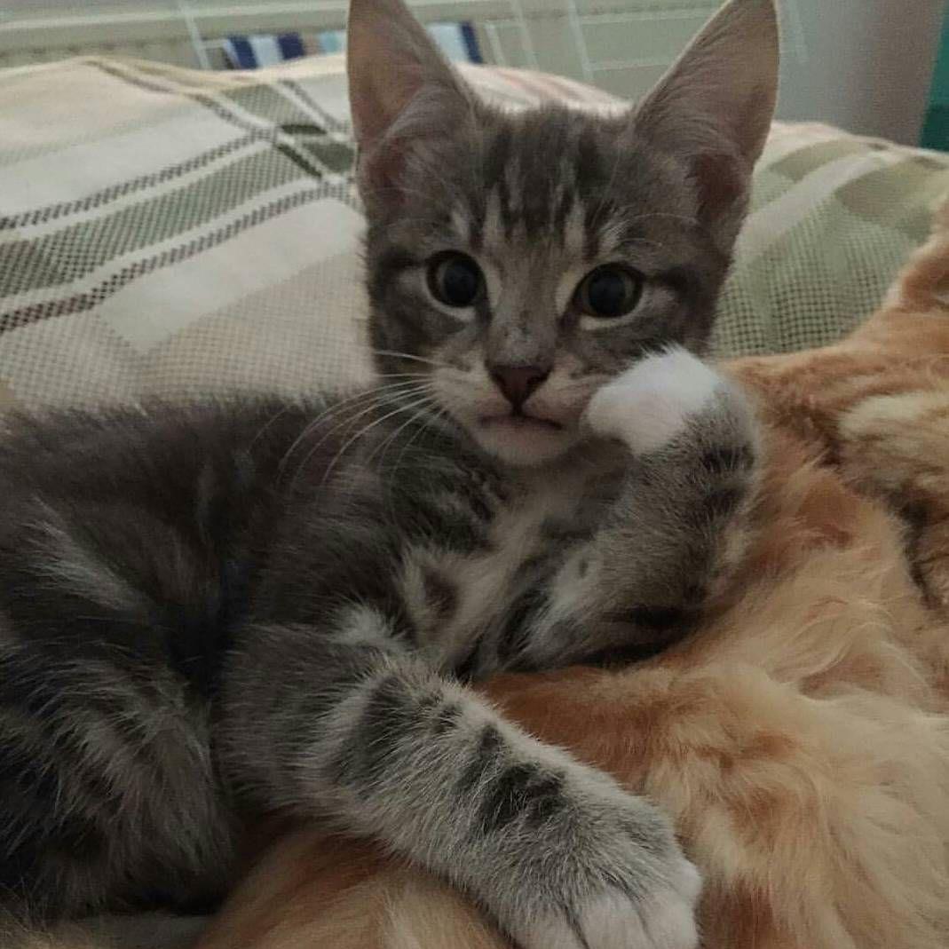 Please, tell me more! ...   #Cats #Cat #Kittens #Kitten #Kitty #Pets #Pet #Meow #Moe #CuteCats #CuteCat #CuteKittens #CuteKitten #MeowMoe  https://www.meowmoe.com/561463/please-tell-me-more-72/…   .