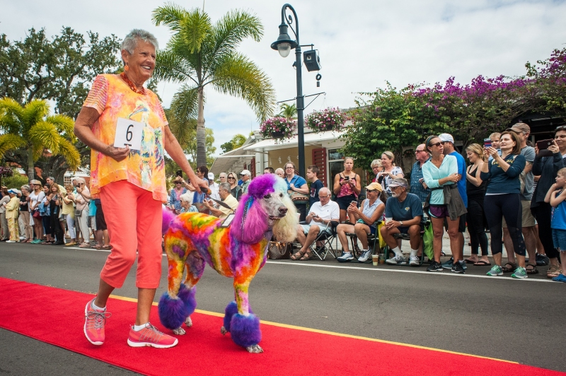 Looking for something fun to do today in Naples with your furry friend? Head downtown to Third Street South for the 12th annual Pets on Third from 10 AM to 2 PM. 🐩🐕 #Pets #dogs #Naples #SundayMorning