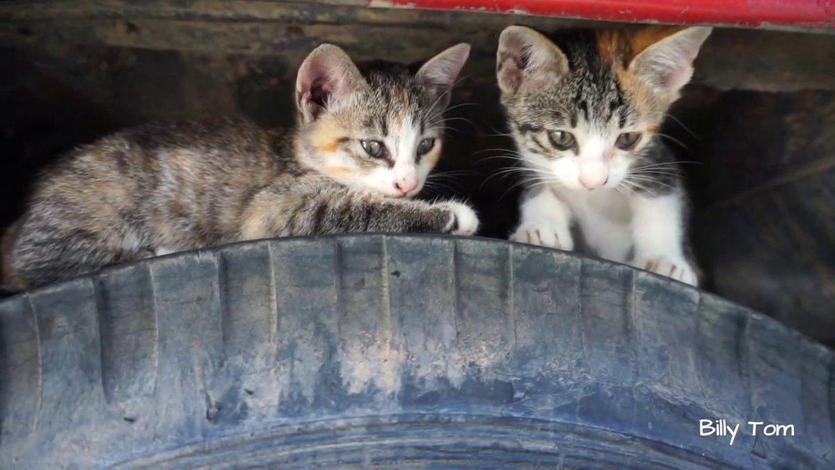 Cute Kittens Playing Around ...   #Cats #Cat #Kittens #Kitten #Kitty #Pets #Pet #Meow #Moe #CuteCats #CuteCat #CuteKittens #CuteKitten #MeowMoe   #CameraPhone #CuteCatsVideos #CuteKittensVideos #CuteKittiesVideos #CuteMeowVideos   https://www.meowmoe.com/561465/cute-kittens-playing-around-the-truck/…   .