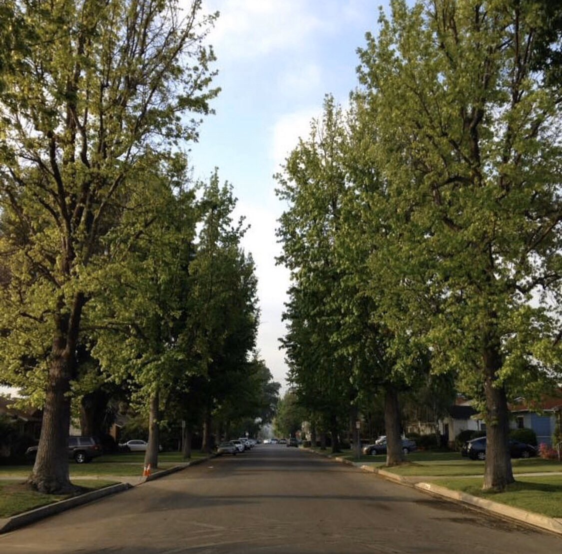 Same street, different season, the wonder of nature. SWIPE ⬅️ 🌿🍃 #summer #fall #winter #spring  • • • • #neighborhood #treelinedstreet #streetphotography #season #fourseasons #nature #naturephotography #changeofleaves #truebeauty 📸🌏